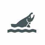Icon of fish coming out of water